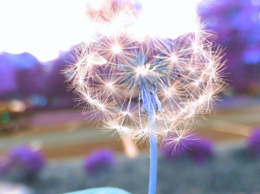 Free Wishes for Cancer Patients and Families